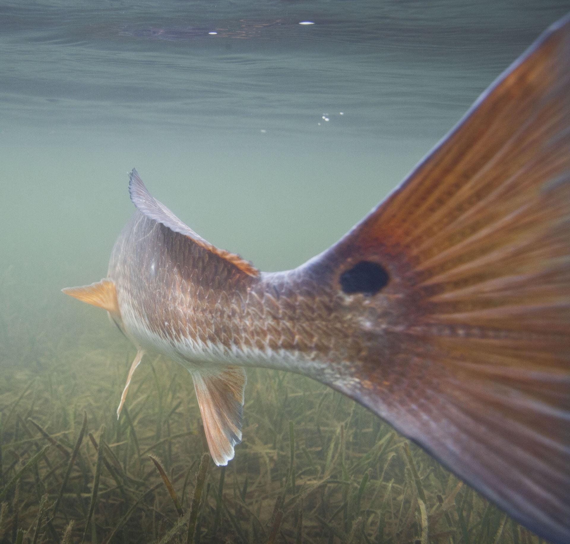 Panama City Beach Fly Fishing Photo Gallery - SWE